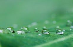 De dalingen van het water op de bladeren. Royalty-vrije Stock Fotografie