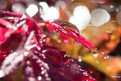 De dalingen van het water op de bladeren Stock Afbeeldingen