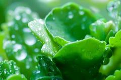 De dalingen van het water op de groene installatie royalty-vrije stock foto's