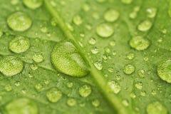 De dalingen van het water op een groen blad Royalty-vrije Stock Foto
