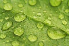 De dalingen van het water op een groen blad Stock Foto's