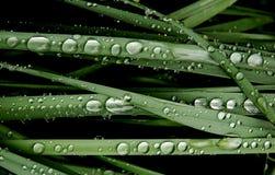De dalingen van het water op een groen gras Stock Fotografie