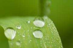 De dalingen van het water op groen blad stock foto's