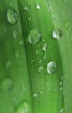 De dalingen van het water op groen blad stock fotografie
