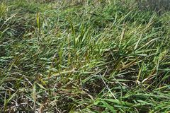 De dalingen van het water op groen gras Close-up Vroege zonnige ochtend stock foto's