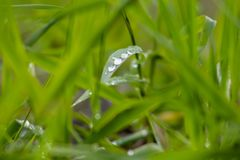 De dalingen van het water op groen gras royalty-vrije stock afbeeldingen