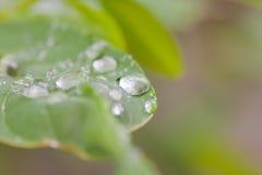 De dalingen van het water op groene bladeren Stock Foto
