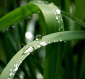 De dalingen van het water op groene bladeren Royalty-vrije Stock Afbeelding