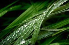 De dalingen van het water op het gras Royalty-vrije Stock Afbeeldingen