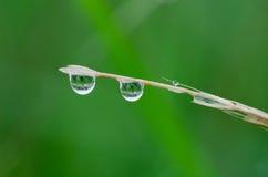 De dalingen van het water op het gras Stock Afbeeldingen