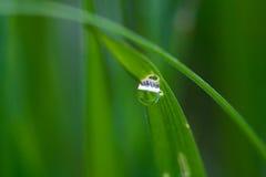De dalingen van het water op het gras Stock Foto