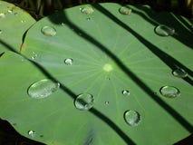 De dalingen van het water op lotusbloemblad Royalty-vrije Stock Fotografie