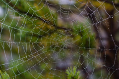 De dalingen van het water op spiderweb stock fotografie