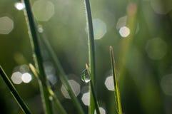 De dalingen van de ochtenddauw op groene grasbladeren royalty-vrije stock foto