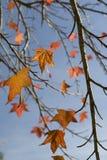 De dalingsbladeren van de herfst Stock Foto's