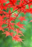 De dalingsbladeren van de herfst Royalty-vrije Stock Afbeelding