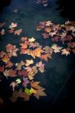 De dalingsbladeren van de herfst Stock Foto