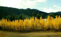 DE DALINGSkleuren VAN COLORADO Royalty-vrije Stock Fotografie