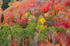 De dalingskleuren van de berg stock foto's