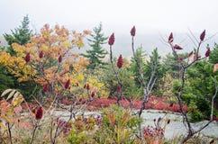 De Dalingskleuren van het Acadia Nationale Park Stock Afbeelding