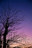 De dalingsseizoen van de schemeringhemel met silhouet droge boom Stock Foto