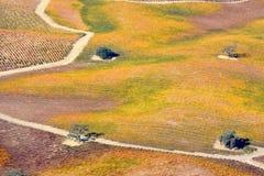 De Dalingswijngaarden van Pasorobles van een vliegtuig worden bekeken - verbazende de herfstkleuren die stock foto