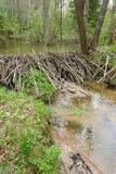 De dam van de bever stock afbeeldingen