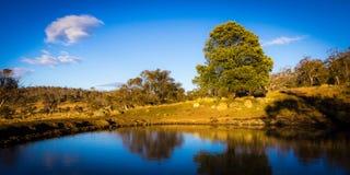 De dam van het landbouwbedrijf bij zonsopgang Stock Foto
