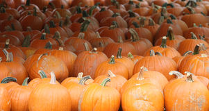 De Dankzegging van Halloween van de pompoen Stock Afbeeldingen