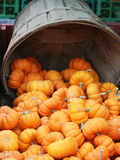 De Dankzegging van Halloween van de pompoen Stock Foto's