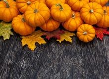 De dankzeggingsachtergrond van de de herfstpompoen Stock Afbeelding