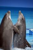 De dans van de dolfijn Stock Foto
