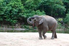De dans van de olifant stock afbeeldingen