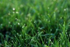 De dauw. Het Gras van de lente Royalty-vrije Stock Afbeelding