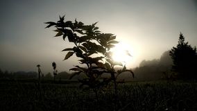 De dauw van de dalingenochtend op gras en installaties op zonsopgangachtergrond stock videobeelden