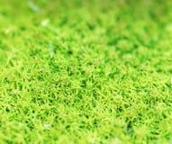 De Dauw van de de lenteochtend Vers Groen Mos Als achtergrond Stock Foto