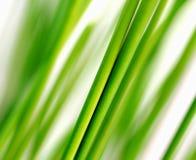 De Dauw van de de lenteochtend Verse Groen Als achtergrond Stock Fotografie