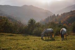 De dauw van de de ochtendmist van het paardweiland Royalty-vrije Stock Foto's