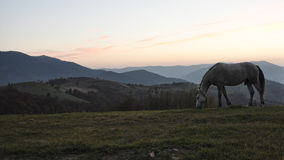 De dauw van de de ochtendmist van het paardweiland Royalty-vrije Stock Fotografie