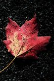 Autumn Dew stock foto