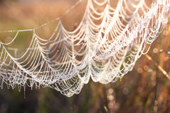 De dauw van de ochtend op een Web Stock Foto's