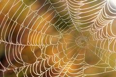 De dauw van de ochtend op een Web Stock Foto