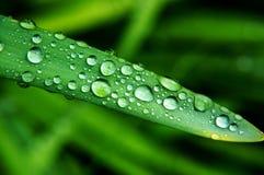 De dauw van de ochtend op groen Blad Royalty-vrije Stock Afbeelding