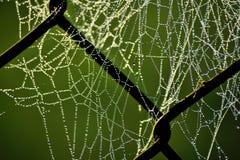 De Dauw van de ochtend op Spinnewebben Stock Afbeeldingen