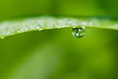 De dauw van de ochtend op vers groen blad Stock Foto