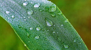 De dauw van het water op een blad stock fotografie