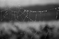 De dauw van de ochtend op een spinneweb royalty-vrije stock afbeeldingen