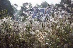 De dauw van de ochtend op een spinneweb Royalty-vrije Stock Foto's