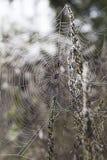 De dauw van de ochtend op een spinneweb Stock Fotografie
