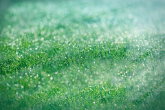 De dauwdalingen van de ochtend op gras Royalty-vrije Stock Afbeeldingen